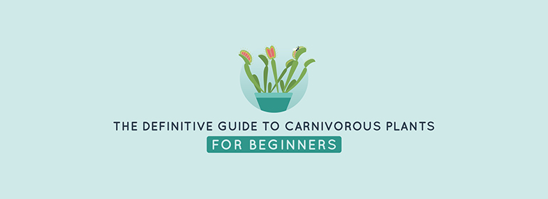 The Definitive Guide to Carnivorous Plants (for beginners)