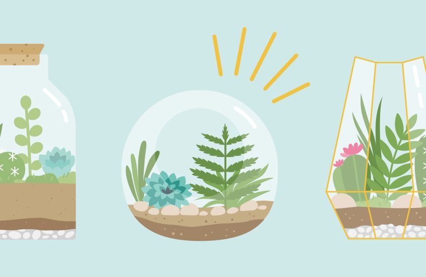 Terrariums: The Definitive Guide