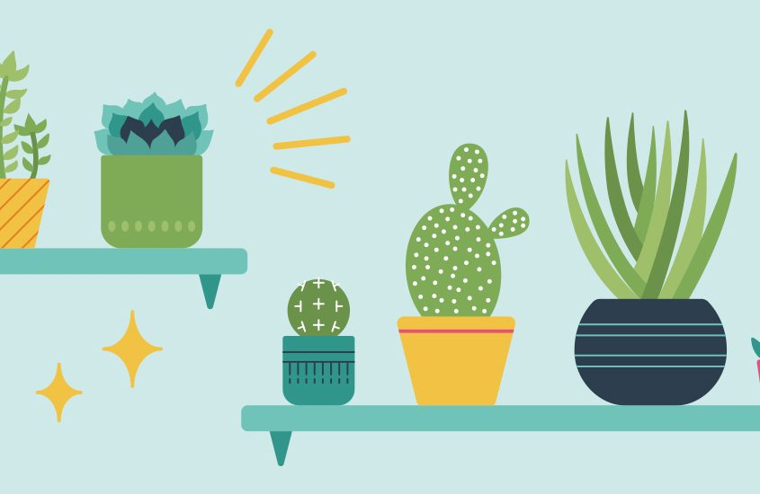 The Definitive Guide to Cacti & Succulents for beginners
